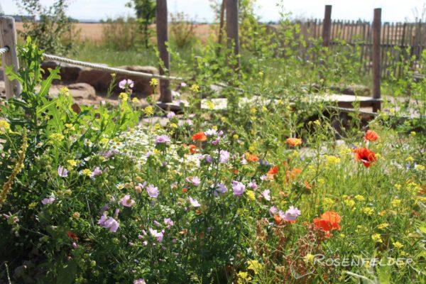 naturnahe-kita-galerie-wildblumen